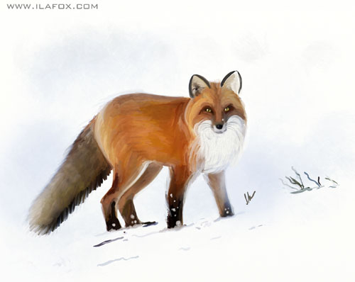 30 Day Drawing Challenge, something orange, Desafio dos 30 dias de desenho, alguma coisa laranja, raposa na neve, by ila fox