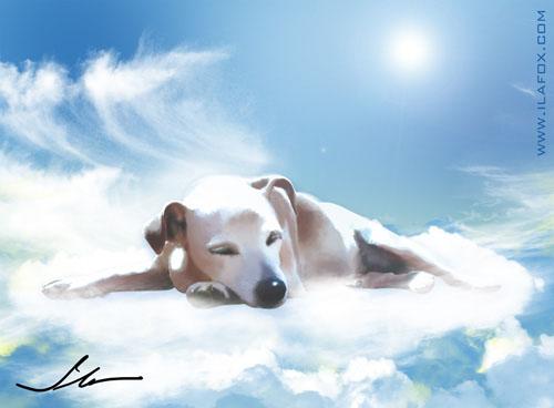 catita no céu dos cachorros by ila fox