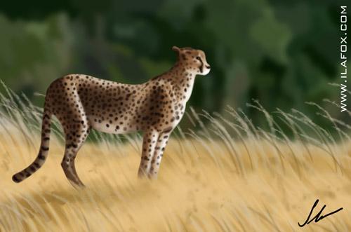 guepardo na savana africana ilustração by ila fox