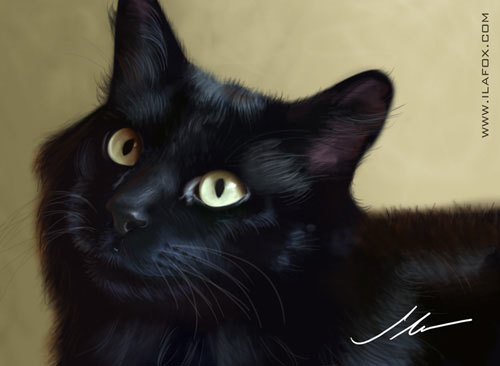 Ilustração animais de estimação, gato preto miucho churumelo ilustração realista chat noir