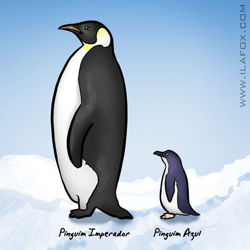busca bizarra, o que é pinguim, diferença tamanho pinquim imperador e pinguim azul, emperor penguim and blue penguin, ilustração by ila fox